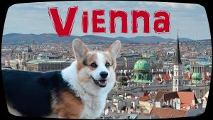 Corgi Leo. Jogging in Vienna. WATCH on YouTube. https://youtu.be/wx5h4VHtCsk 01
