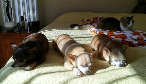 Oliver, Percy , Iggy and Stanley enjoying a nap in the sun.My Tribe