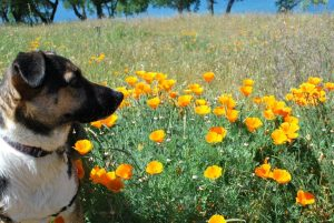 From a recent trip with RitaPuppy in the Poppies
