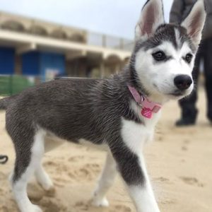 As a puppy on the beach