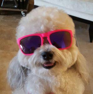 Wearing Waveborn SunglassesSnarky Barky in my Waveborn Sunglasses
