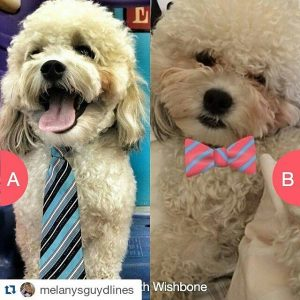 Tie or Bow Tie?What should I wear to the Blog Paws conference?