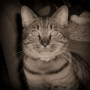 Henry is a twittering and blogging cat that loves his anipals, greenies, and anything that he can de