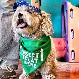 Thanks to Partners Dog Training in Phoenix for this photo!Insert Treat Here Bandana!