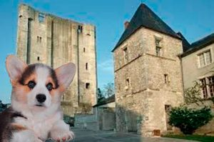 Leo the corgi rules!Castle chief