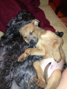 Milo got really attached to Sylvie. She taught him how to play. They snuggled together the evening o