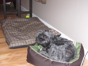 I have 4 dog beds. Which does Milo like best? The smallest one. Of course.Milo and the small dog bed