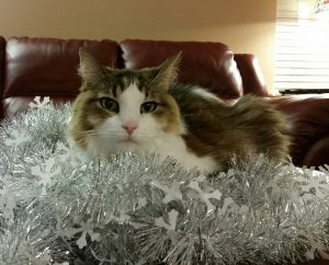 Stanley loves to help decorate at the holidaysGarland makes my eyes sparkle
