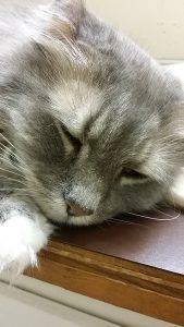 Hi Dawn from Pet Faves and when I get back to being able to work on it- NEPA Pets. My cat co-writers