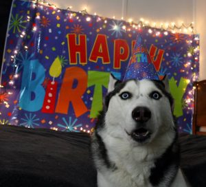 The birthday boy is all ready for his party tonight!  Today marks one year since Shadow was