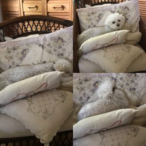 pooch in pillows 483D0151-5B6B-47D9-A92D-12827F111708