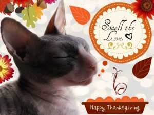we ♥ Thanksgiving 'cause the MaMa cooks for us.November Avatar