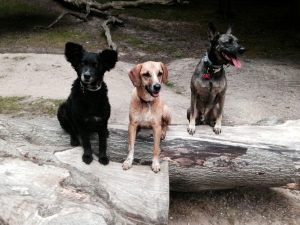 These are my 3 rescue street dogs from Brazil (Belinha, Nina and Moleque). I actually share Nina wit