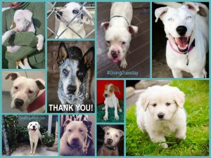 #GivingTuesday we broke all fundraising efforts and raised enough to sponsor 20 deaf dogs (in one da