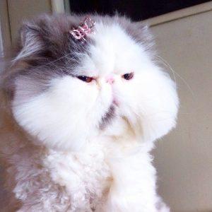 Best Cats of Instagram 2013 (11)