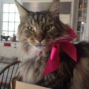 Best Cats of Instagram 2013 (2)