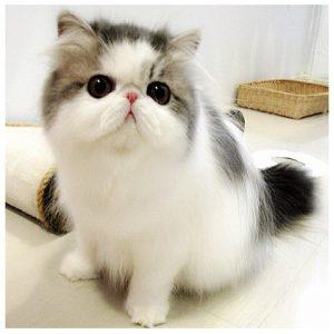 Best Cats of Instagram 2013 (3)