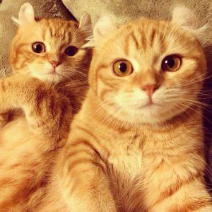 Best Cats of Instagram 2013 (4)