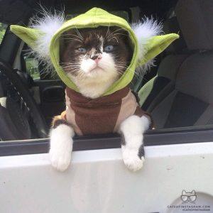 Best Cats of Instagram 2013 (5)