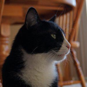 Best Cats of Instagram 2013 (6)