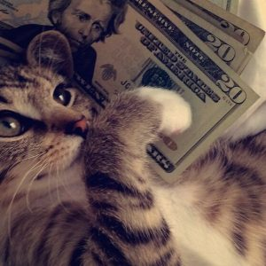 Best Cats of Instagram 2013 (7)