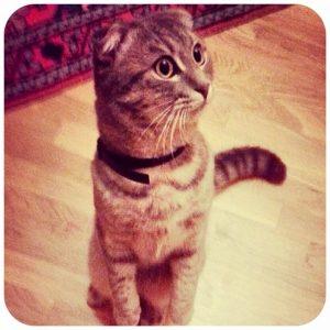 Best Cats of Instagram 2013 (8)