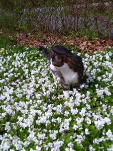 Nissy wading through a sea of violets.Nerissa