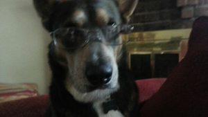 Bookdog