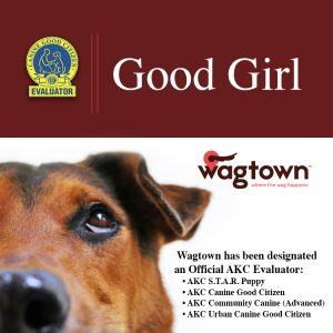 Woohoo! Time to celebrate. Wagtown is officially designated by the AKC to evaluate for Canine Good C