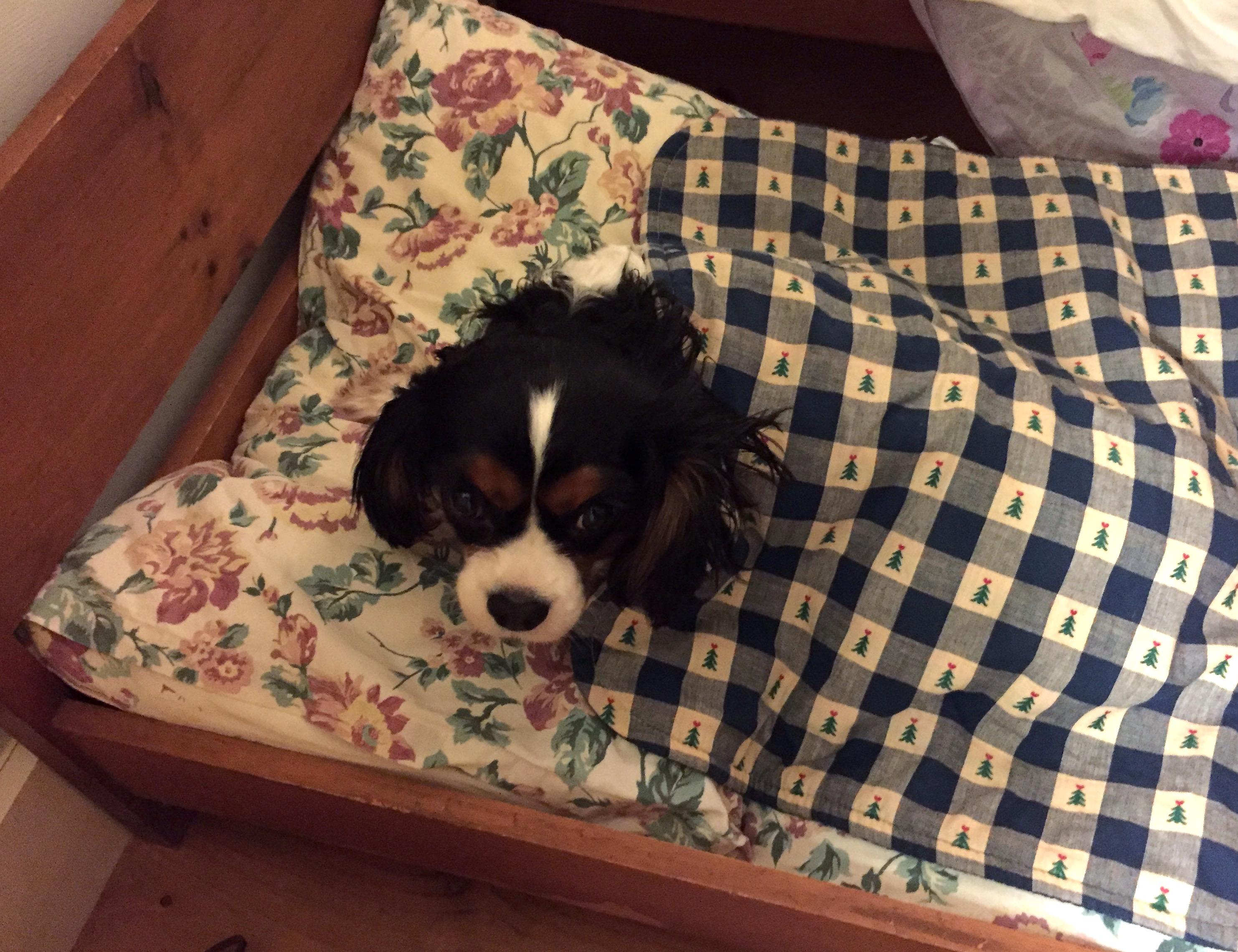 Callie bundled in carCallie Gertie Bed 2Callie in the snowCallie on velvet