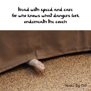 Haiku by Cat: Dangers