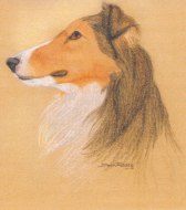 This is my dog Cassie. Cassie was a Shetland Sheepdog which I got when I was 10 years old. Cassie pa