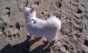 My baby girl.Cassie on the Beach
