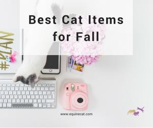 Best Cat Items for Fall Cat Fall – Facebook