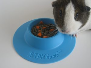 Cocoa is keeping an eye on her STAYbowl™.Cocoa with STAYbowl™