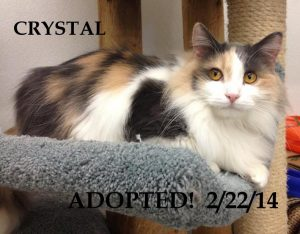 Crystal & Tiger were adopted together!Crystal ADOPTED! 2/22/14