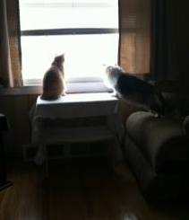Crystal (now Gina) & Tiger (now Tommy) enjoying the view from the window of their new forever ho