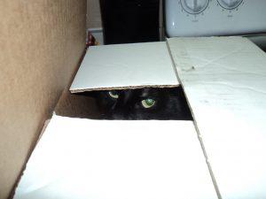 Mo in a box
