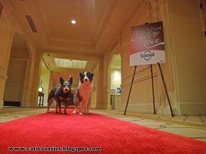 Bella and Terra on the Red Carpet at the Westin Lake Las Vegas for BlogPaws 2014BlogPaws Red Carpet
