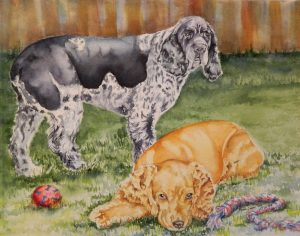 11 X 14 WatercolorCocker Spaniel