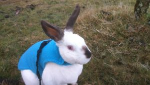 Today's Sunday Selfie with some extra snaps from Speedy's latest trip to the Moors http: