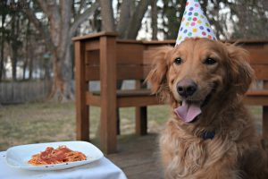 MyDogLikes enjoys a delicious birthday dinner and dessert to celebrate Harley's 9th Birthday!C
