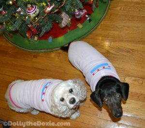 Dolly and Taffy modeling their Chicago flat tshirts.Dolly-Taffy Tshirts