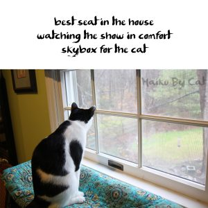 Haiku by Cat: Skybox