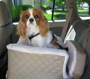 One of our customers sent us this photo of their dog Emma sitting in the Lookout pet car seat they p