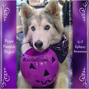 Howloween is right around the corner! Do you know why our Gibson's pumpkin is purple? For Epil