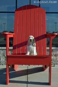 Sometimes I just feel like a real small dog!GBGV Adirondack Chair