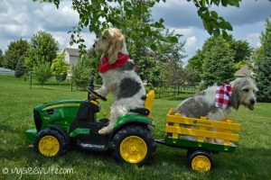 Anyone else doing yard work this weekend?GBGV Farm Dogs