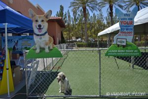 GBGV at BlogPaws PetSafe Daycare