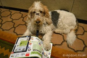 GBGV reading BlogPaws program